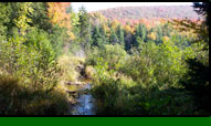Stony Creek Fall Foliage